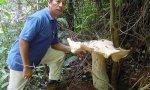 Der heilige Gral der Pilzsammler