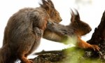 Squirrel Moneyshot