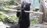 Kung Fu Bär