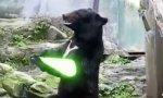 Movie : Yoda Bär