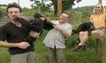 Schimpansen Pannen