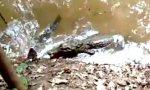 Ein Alligator, ein Zitteraal und ein derbes WTF