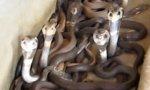 Putztag in der Schlangengrube
