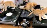 Kitten Disko