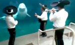 Mexikanisches Wal-Ständchen