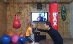 Boxer-Nachwuchs