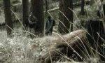 Movie : Yeti-Streich