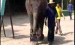 Elefant malt Selbstportrait