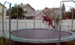 Trampolinhund