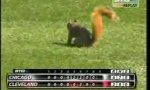 Eichhörnchenterrorist