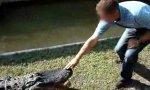 Aligator streicheln