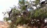 Ziegen-Baum