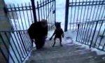 Hund macht Wheelie auf der Treppe