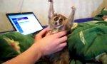 Lemur bei Kraul-Verwöhnung