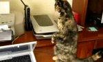 Katze mit USB Anschluss