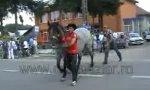 Bauernregel Nr. 1: Niemals hinterm Pferd laufen