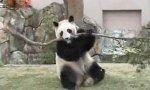 Rage Of The Panda